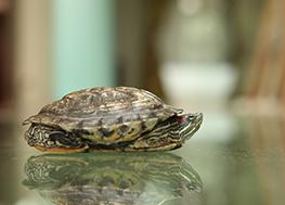 La maison et la tortue